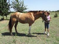 Caprilli Sport Horses