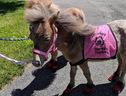 Tiny Mini Horses (Tinyminihorses.com)