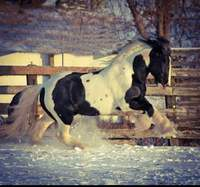 Blackshire Equestrian Centre